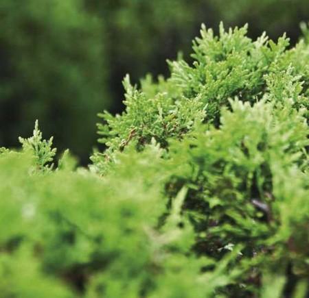 Növénygondozás